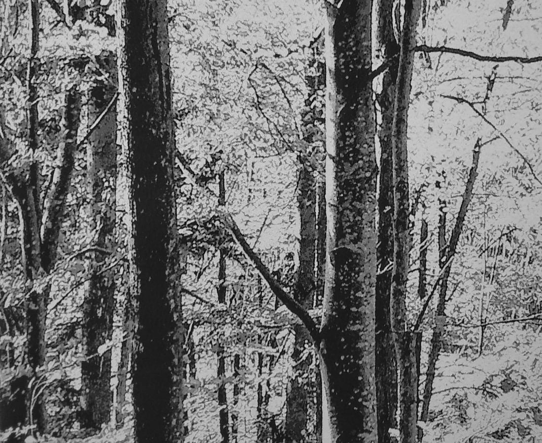 SONJA WEBER, Woodland 1771, 2019