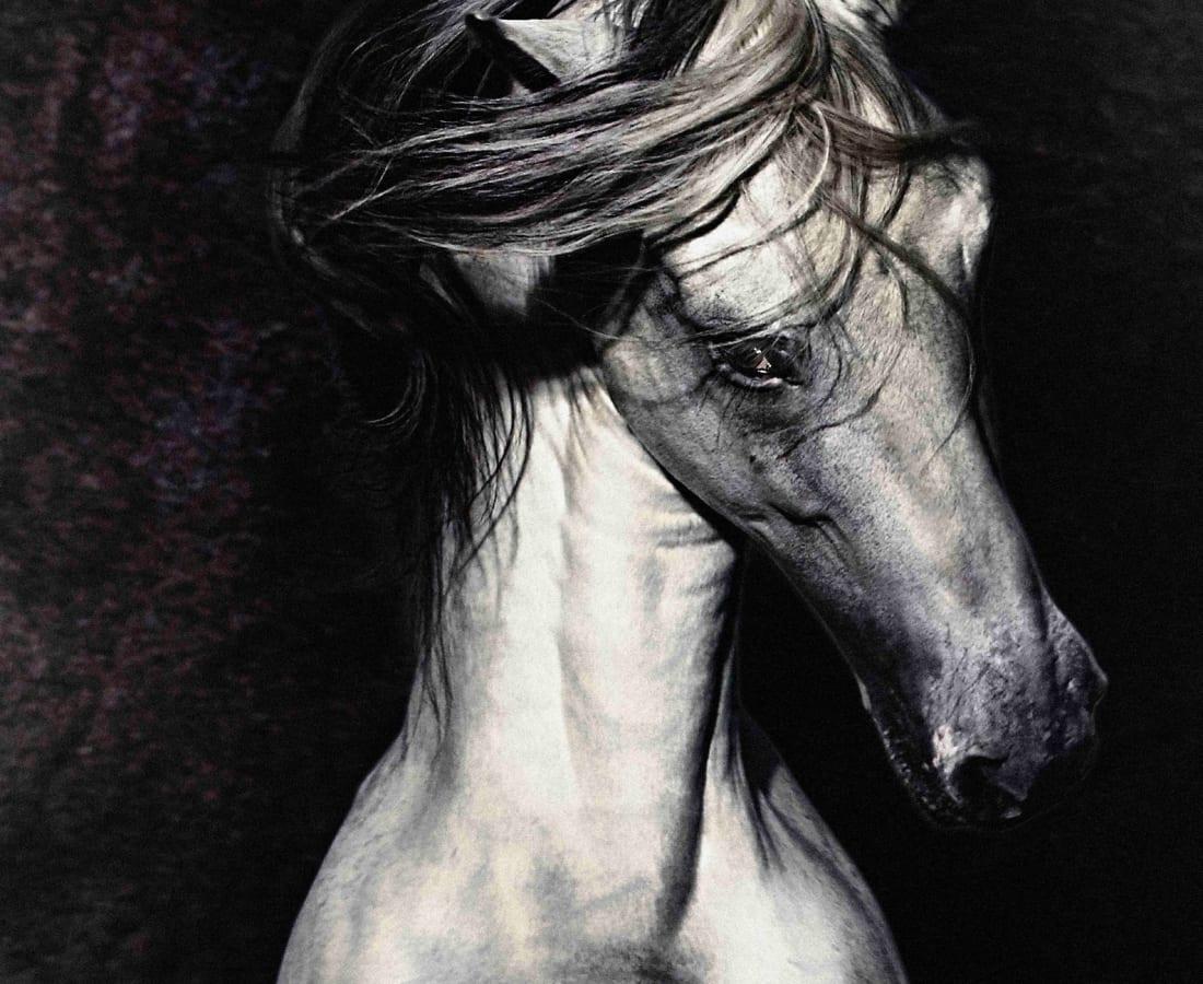 Carli Hermès, Sugar Lump