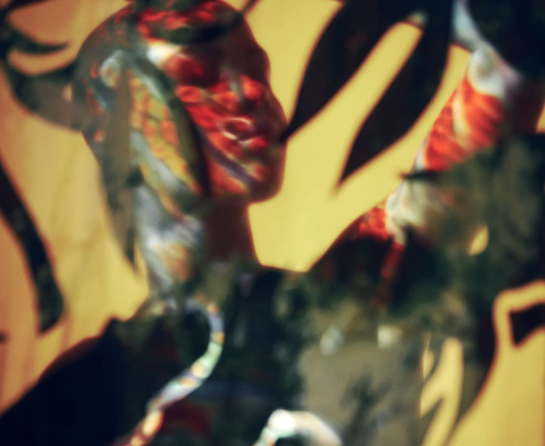 Carli Hermès, Distortion - Vision