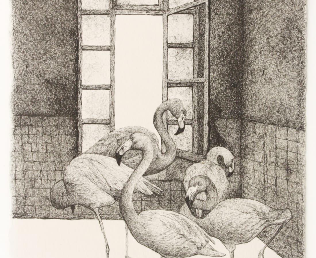 Firi Rahman, Flamingo, 2018