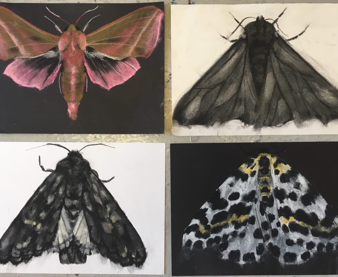 Abigail Reed, Moth drawings, 2018