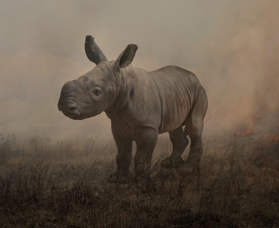 Rory Carnegie, Alan, Rhinoceros, 2018