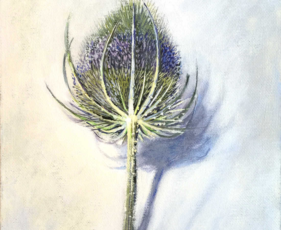 Joyce Pinch, Teasel Head, 2016