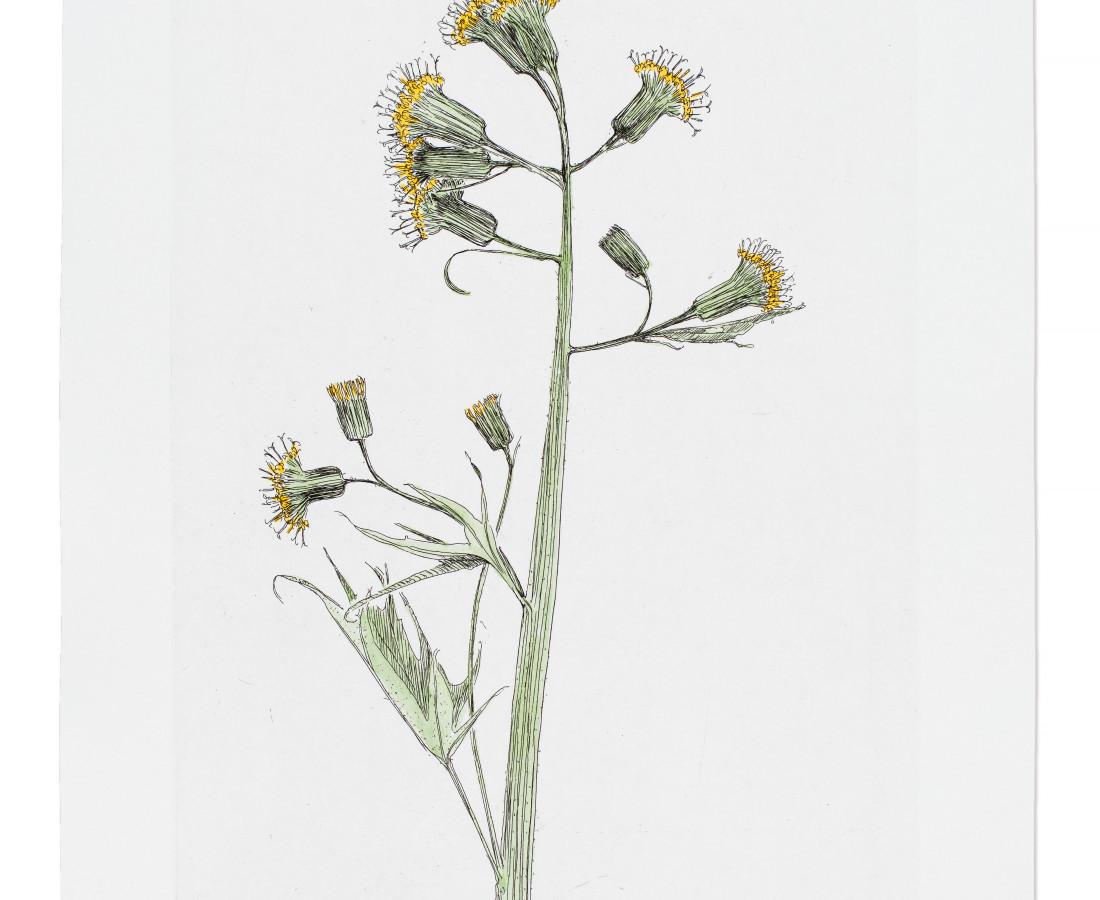 <span class=&#34;artist&#34;><strong>Sarah Horowitz</strong></span>, <span class=&#34;title&#34;><em>Silvercrown</em>, 2016</span>
