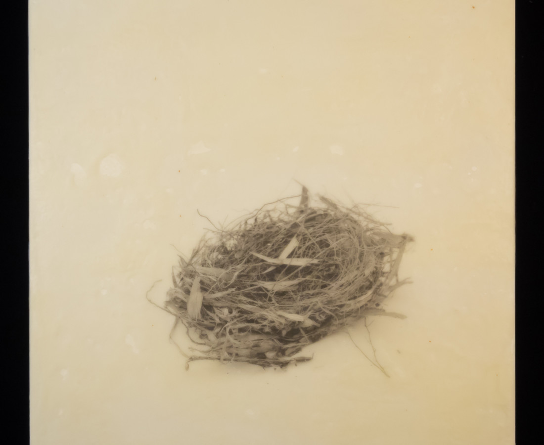 Susan Seubert, Nest 7, 2019