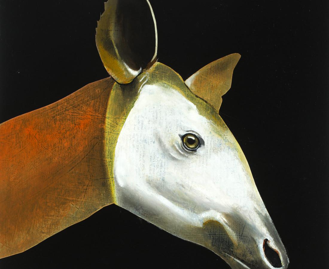 Matthew Dennison, Okapi, 2020