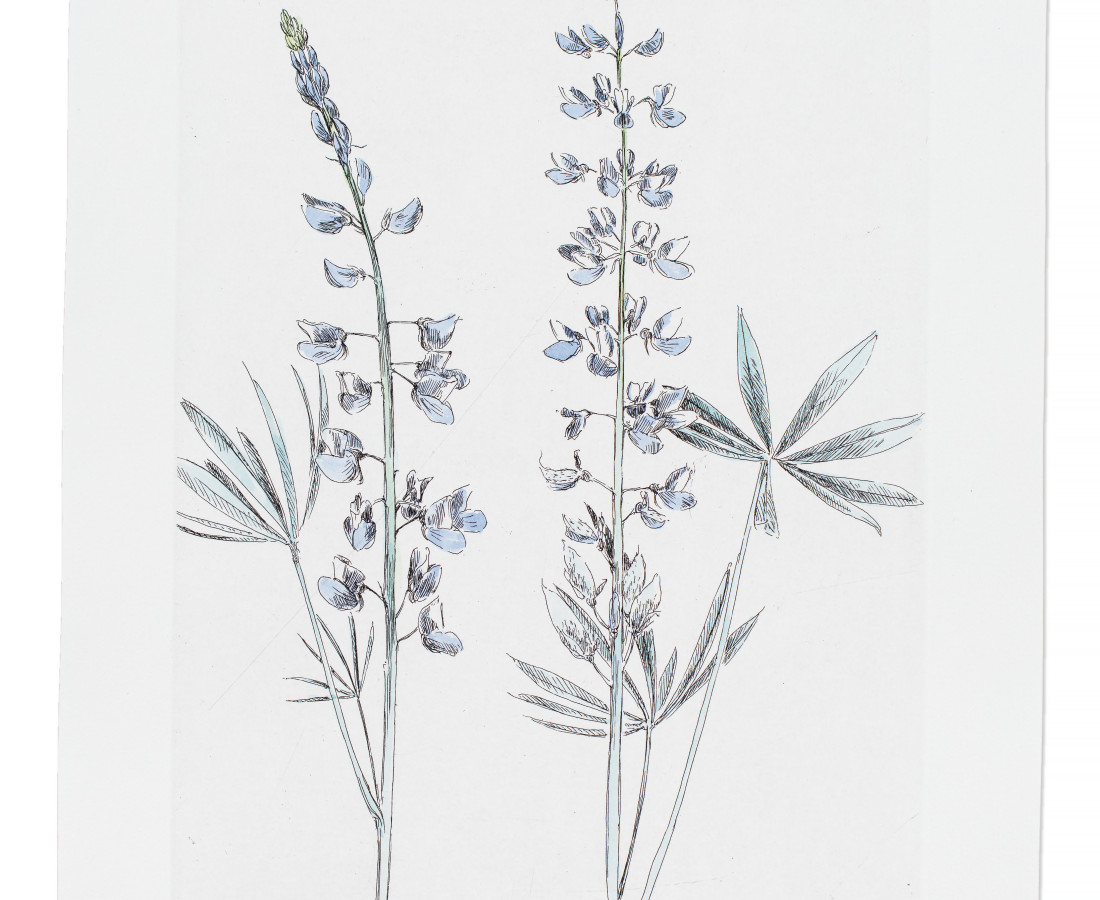<span class=&#34;artist&#34;><strong>Sarah Horowitz</strong></span>, <span class=&#34;title&#34;><em>Wyeth&#8217;s Lupine</em>, 2016</span>