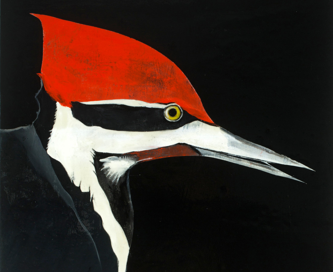 Matthew Dennison, Pileated Woodpecker, 2020