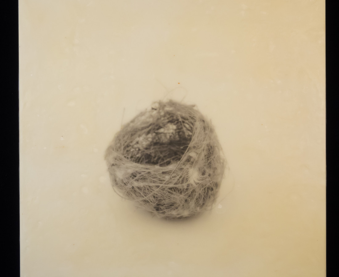 Susan Seubert, Nest 10, 2019