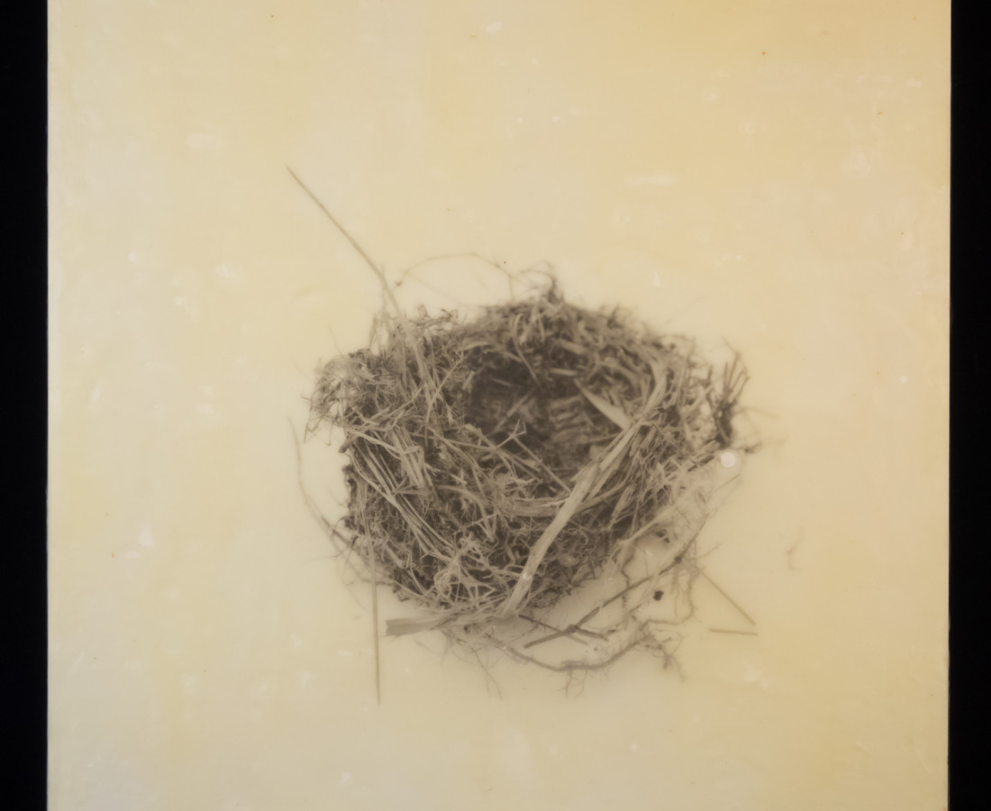 Susan Seubert, Nest 5, 2019