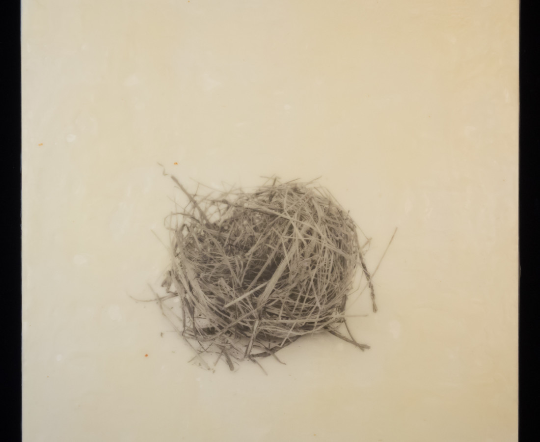 Susan Seubert, Nest 8, 2019