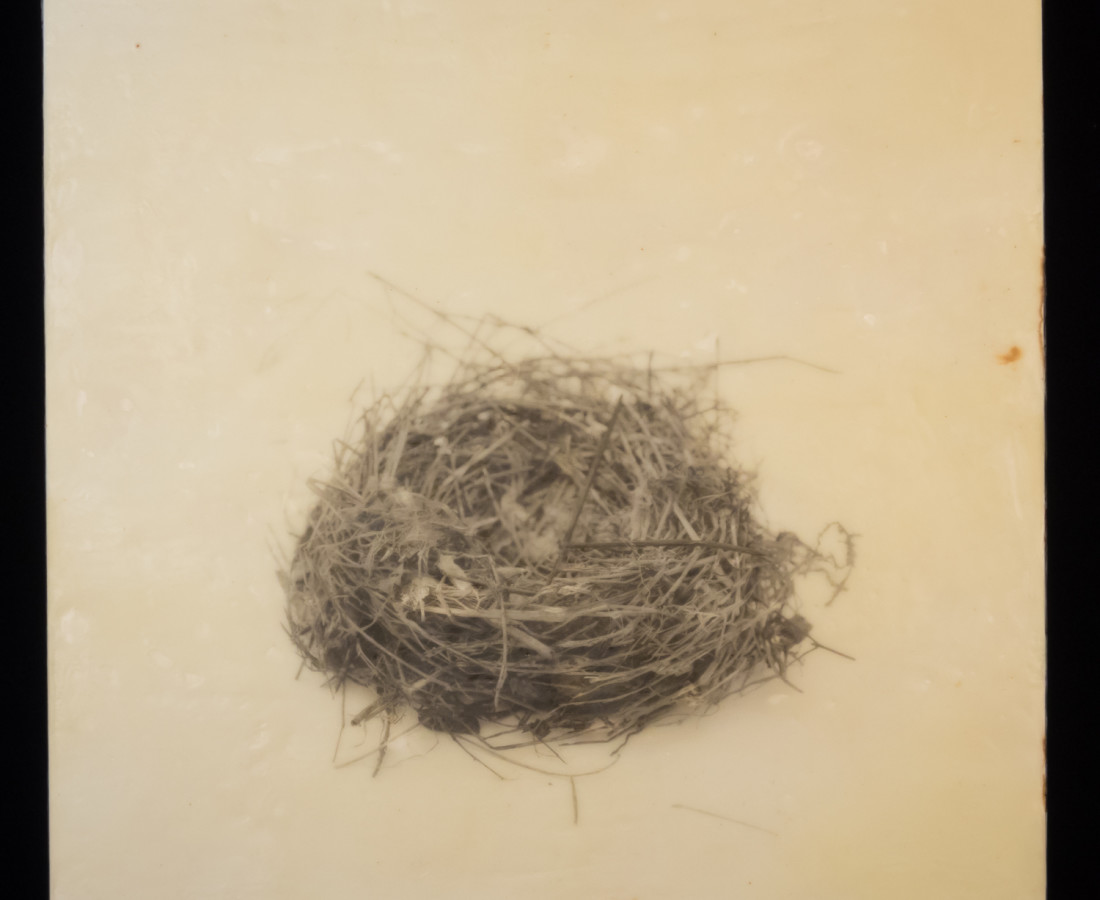 Susan Seubert, Nest 1, 2019