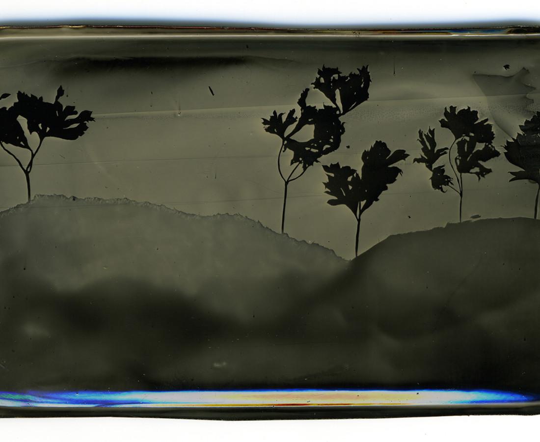 Heather F. Wetzel, Salvage: Constructed Landscape No.31