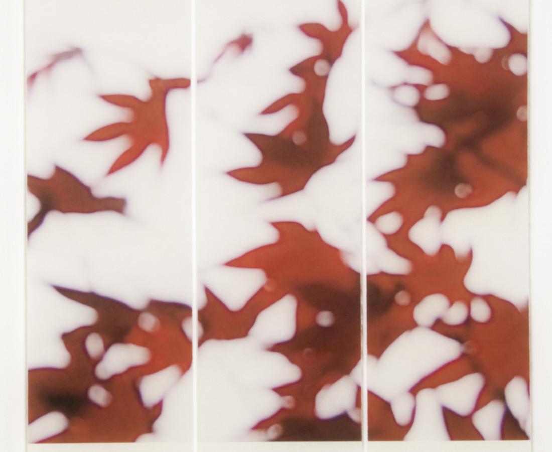 Jeri Eisenberg, Japanese Maple