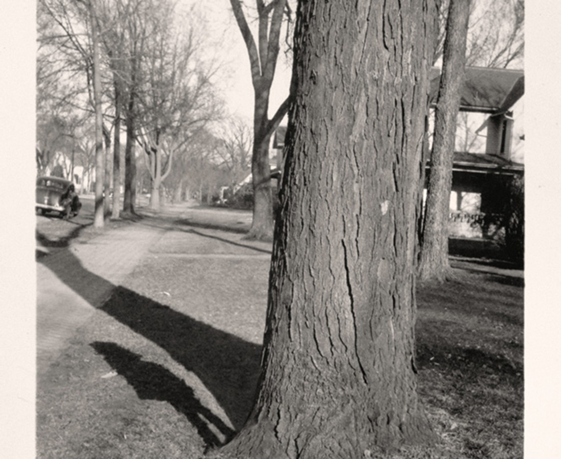 Greg Sand, Traces: Girl Standing by Tree