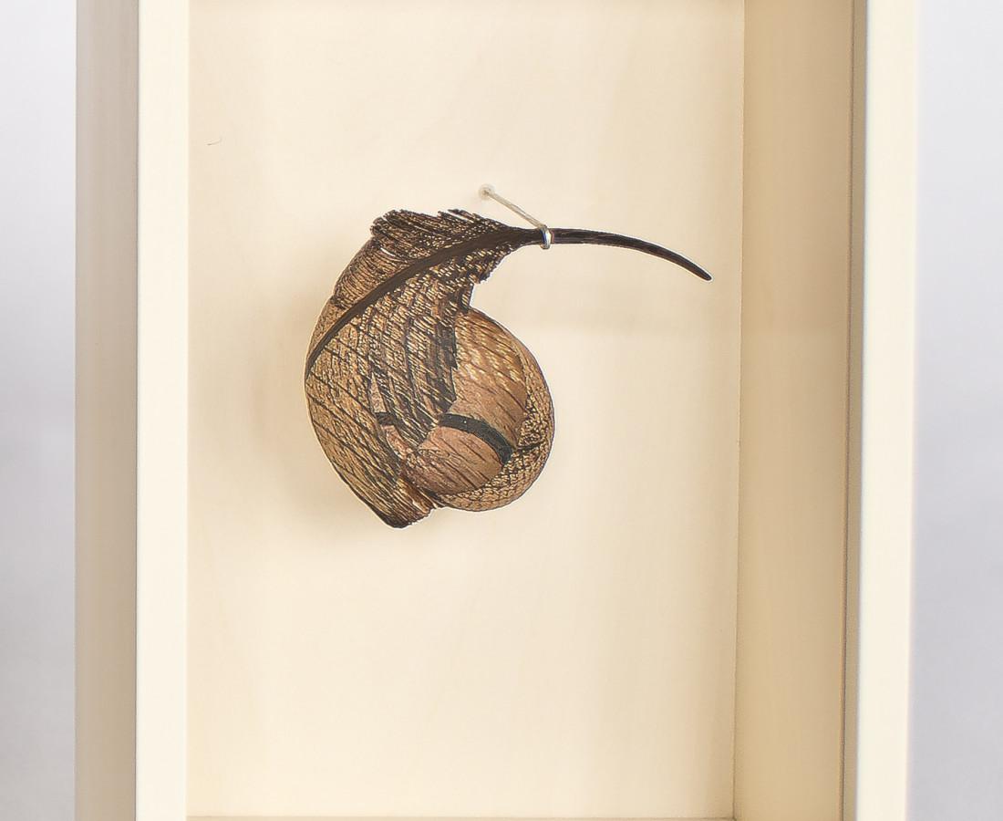 Miriam Carpenter, Feather 11,890