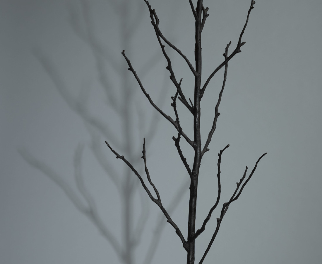 Orla de Brí, Rootless