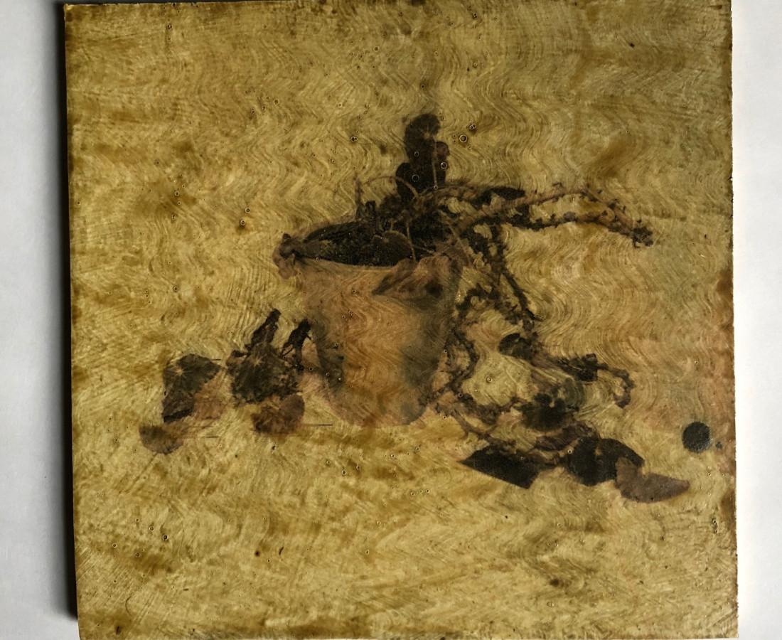 Austin Hearne, Succulent James