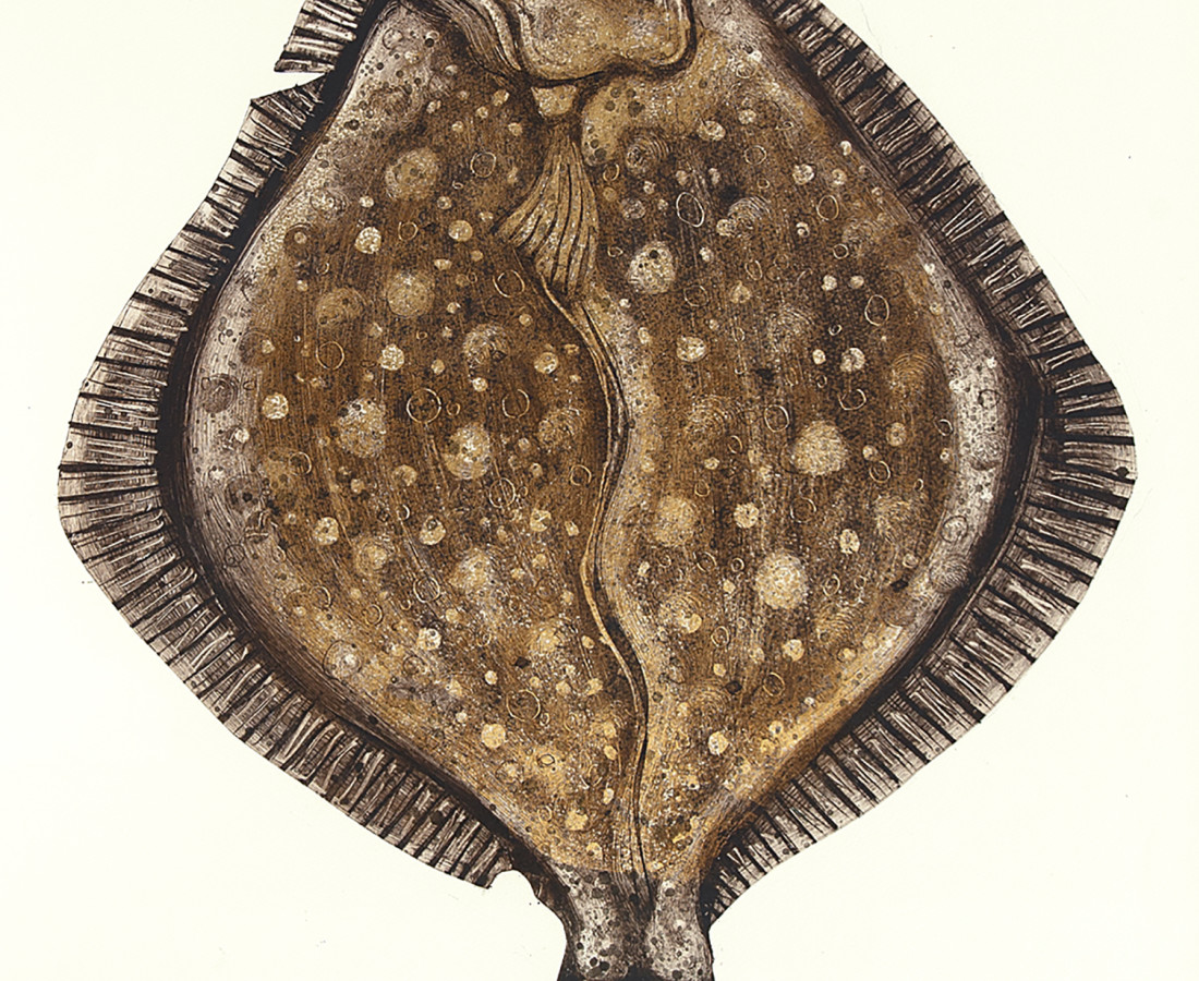 """Caroline Cleave, Turbot """"King of the Sea"""""""