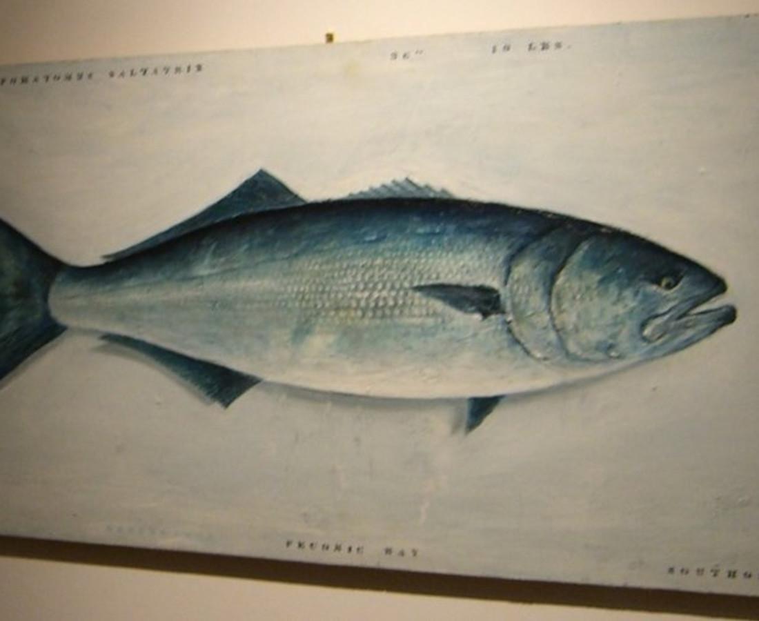 Andrew Castrucci, Fish, 2002