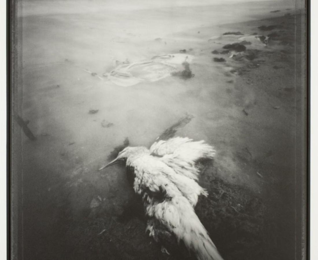 Brittany Beiersdorf, Angels Slumber (Florida), 2005