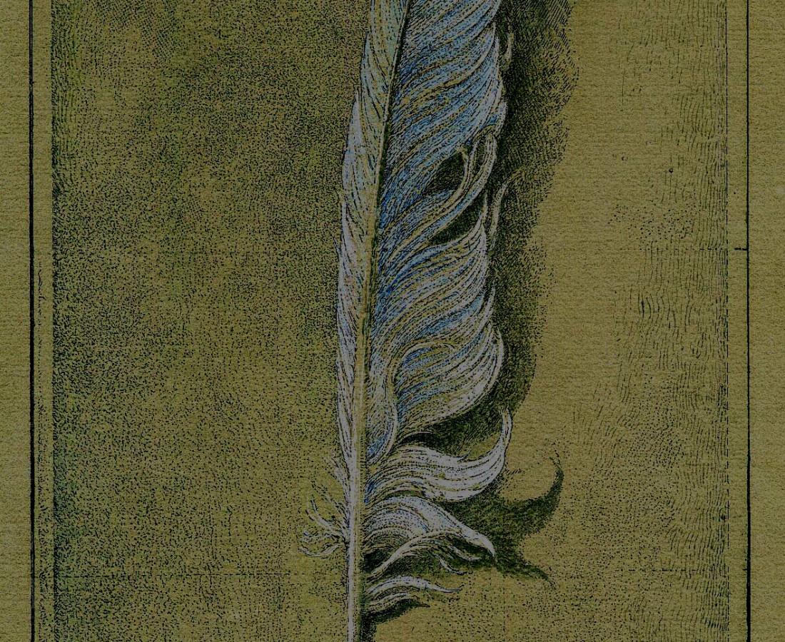 La Plume. 2015. Eau-forte réhaussée à l'aquarelle et à la gouache.