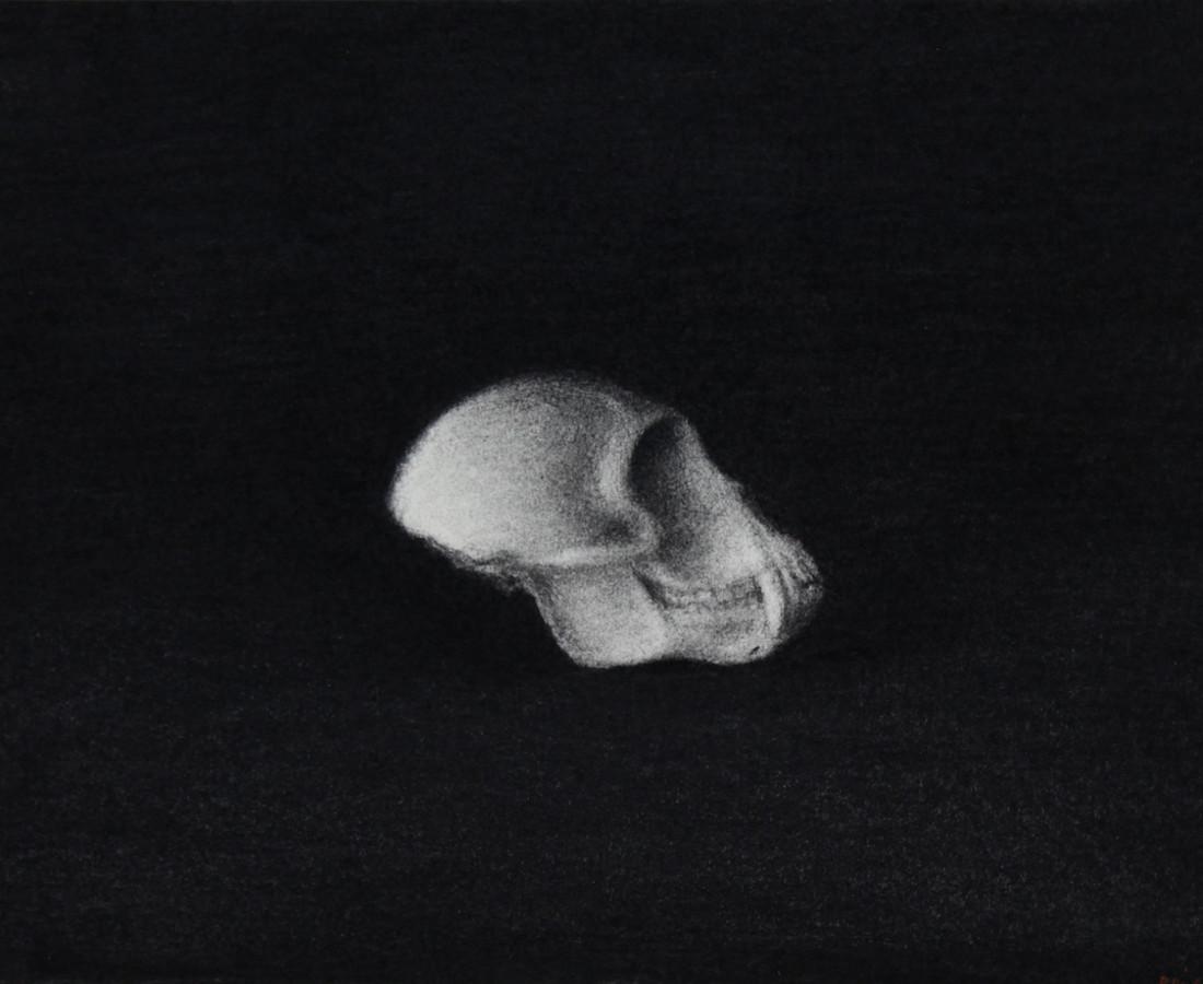Nicolas Poignon, Singe vervet I, 2012