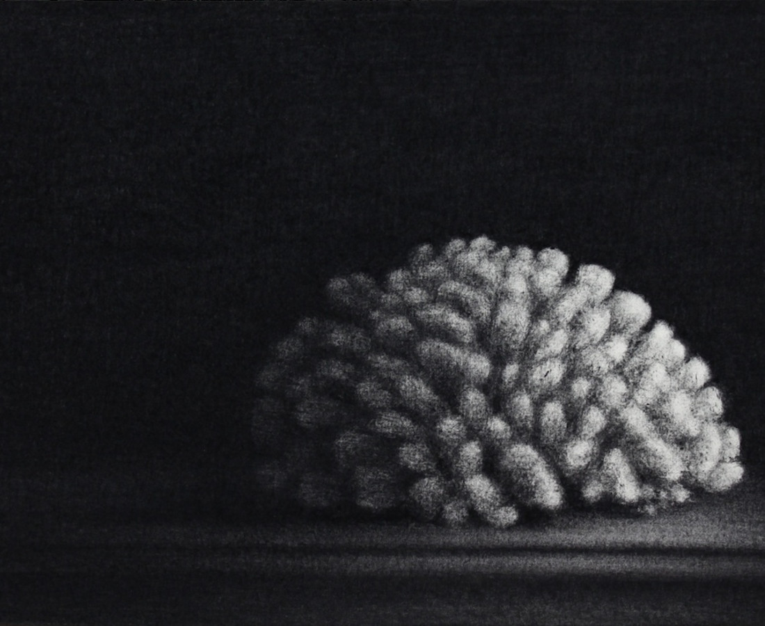 Nicolas Poignon, Le gros corail, 2017