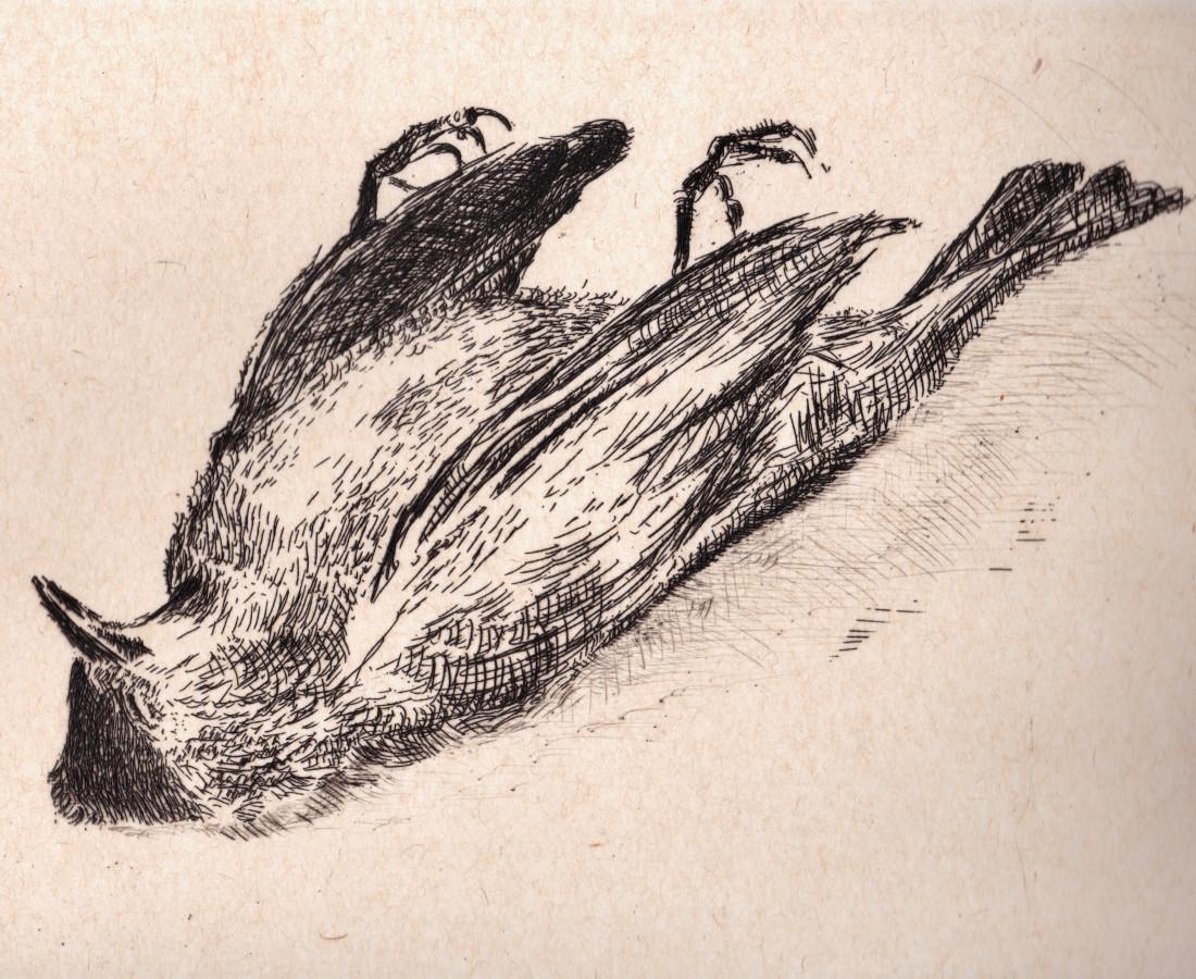 Astrid de La Forest, L'Oiseau mort, 2017
