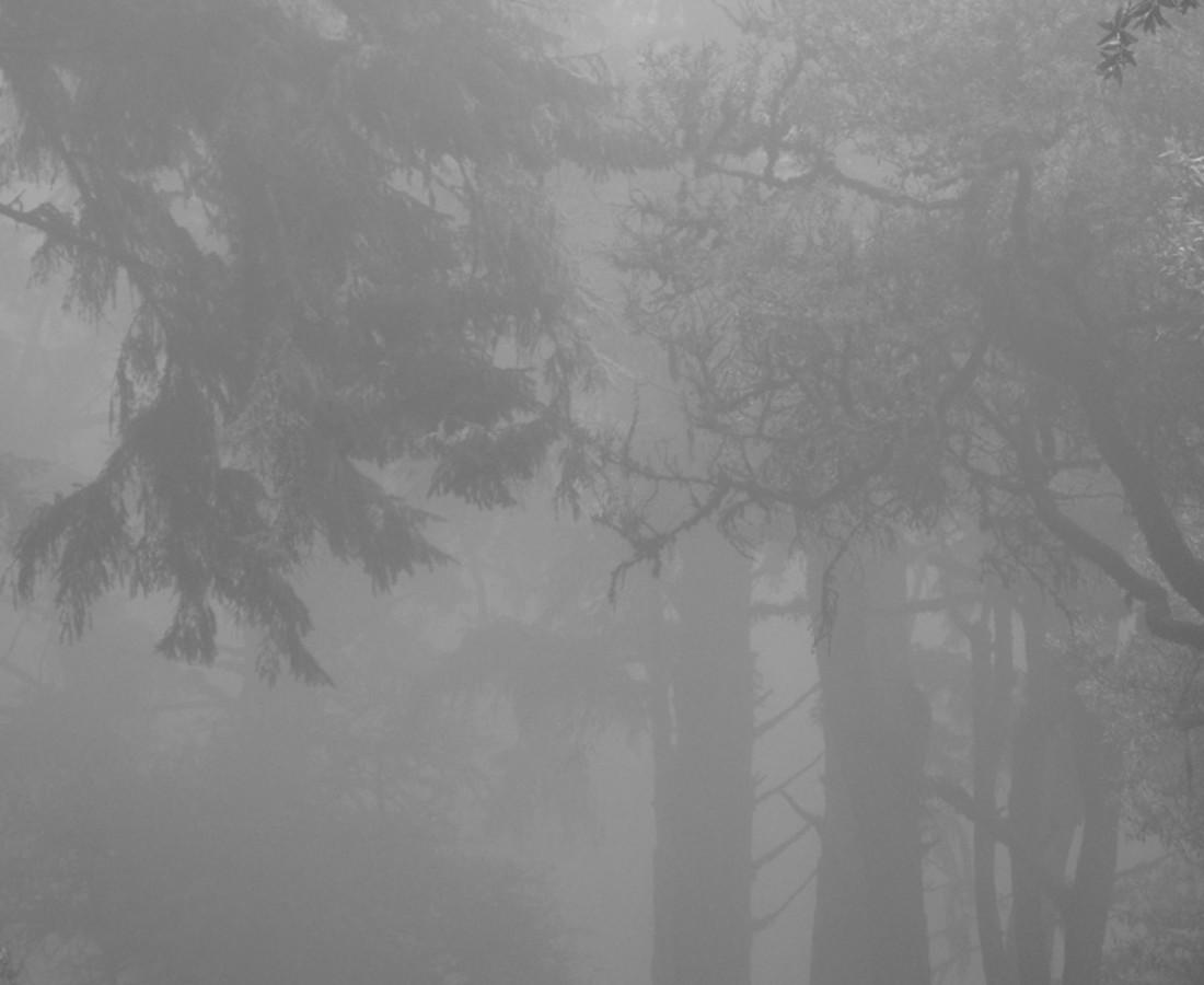 Miya Ando Foggy Forest - hwy 1, 2014