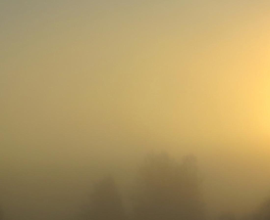 Miya Ando Morning Santa Cruz, 2014