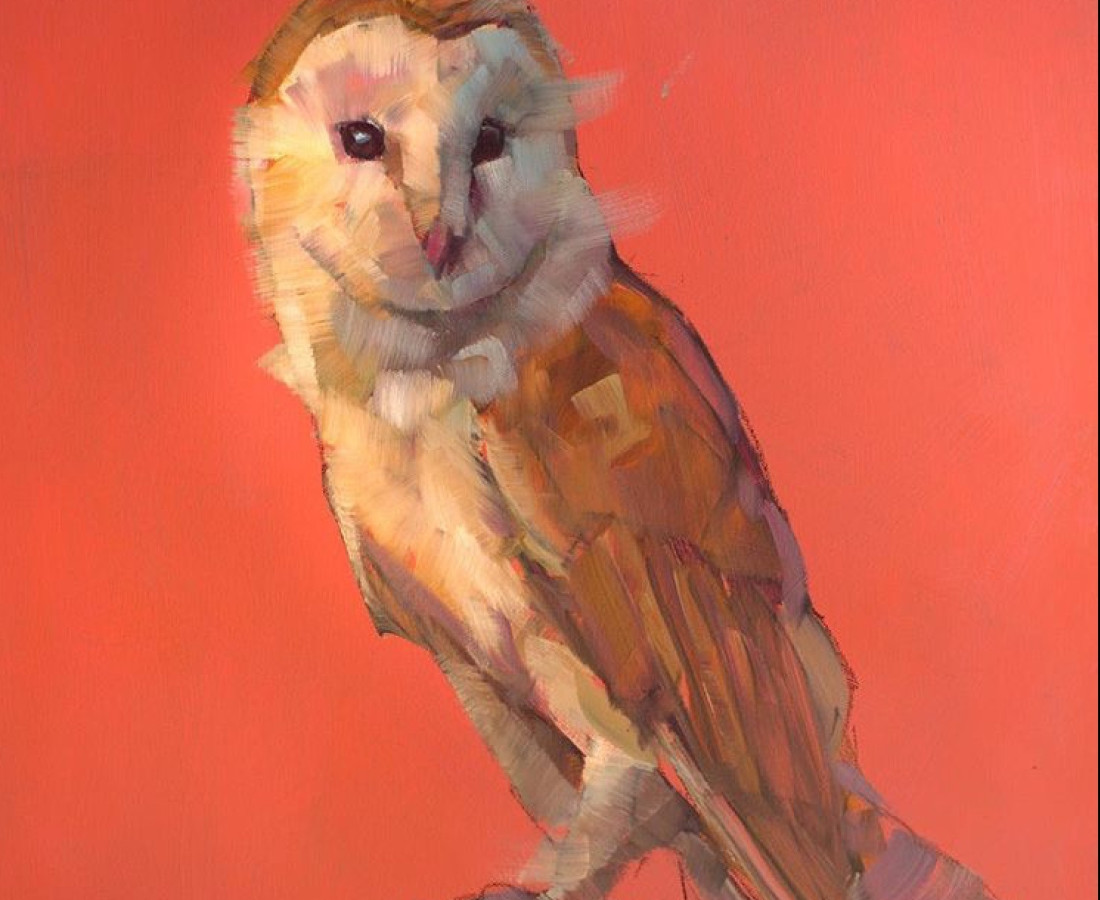 Owl - Jamel Akib