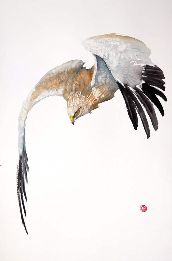 <span class=&#34;artist&#34;><strong>Karl Martens</strong></span>, <span class=&#34;title&#34;><em>Northern Harrier Flying (Unframed)</em></span>