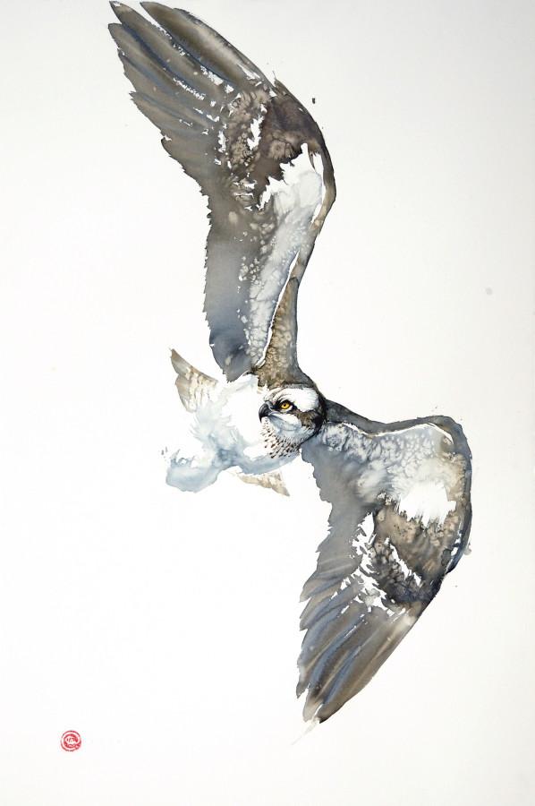 <span class=&#34;artist&#34;><strong>Karl Martens</strong></span>, <span class=&#34;title&#34;><em>Osprey Flying (Unframed)</em></span>