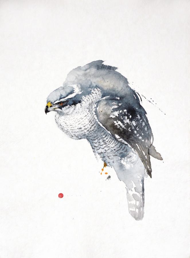 <span class=&#34;artist&#34;><strong>Karl Martens</strong></span>, <span class=&#34;title&#34;><em>Goshawk (Unframed)</em></span>