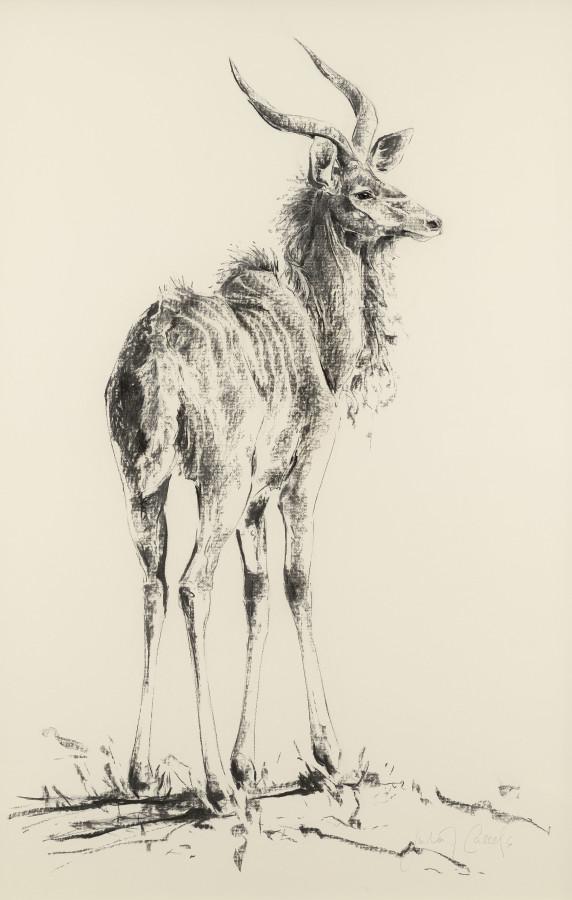 """<span class=""""artist""""><strong>Julia Cassels</strong></span>, <span class=""""title""""><em>Kudu</em></span>"""