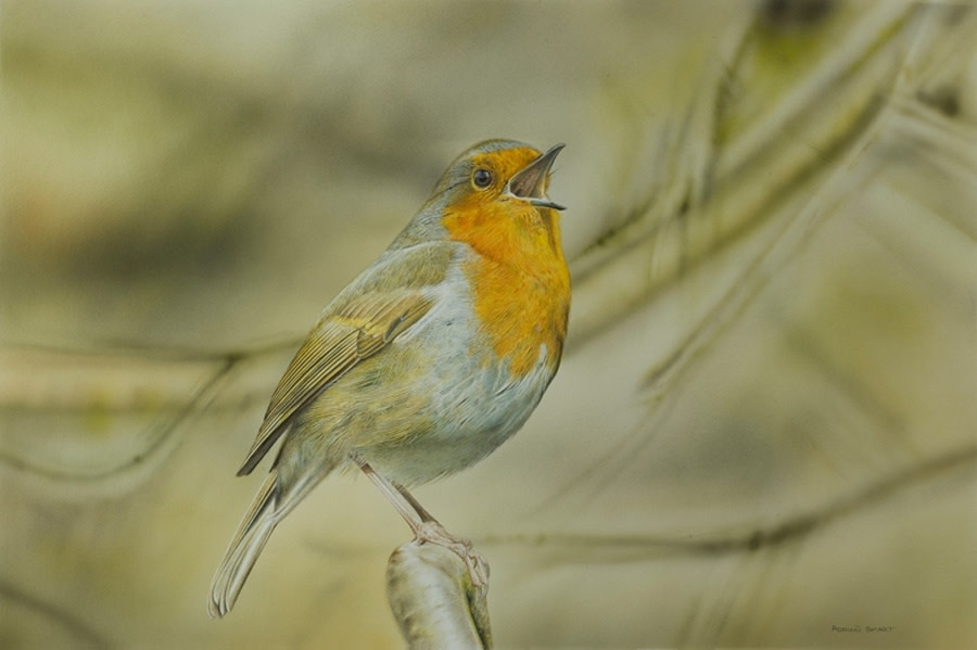 Adrian Smart, Singing Robin, 2016