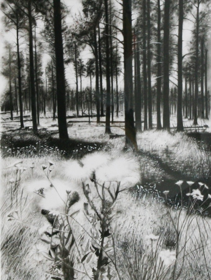Andrew Tift, Arizona Woods