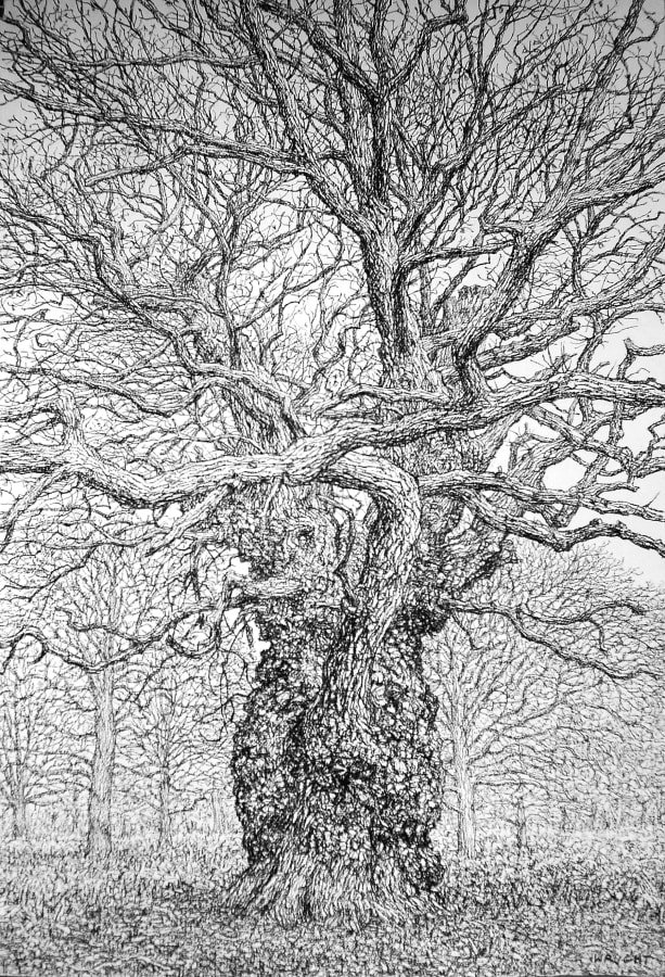 Roy Wright, The Old Gnarled Oak Stands Alone, 2020