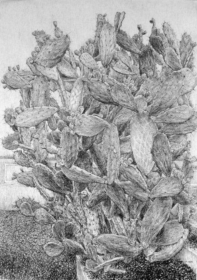 Roy Wright, Cactus (Opuntia Lasiacantha), 2020