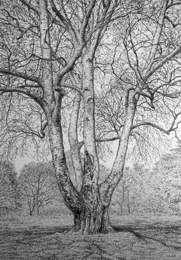 Roy Wright, Winter Silver Birch, 2019