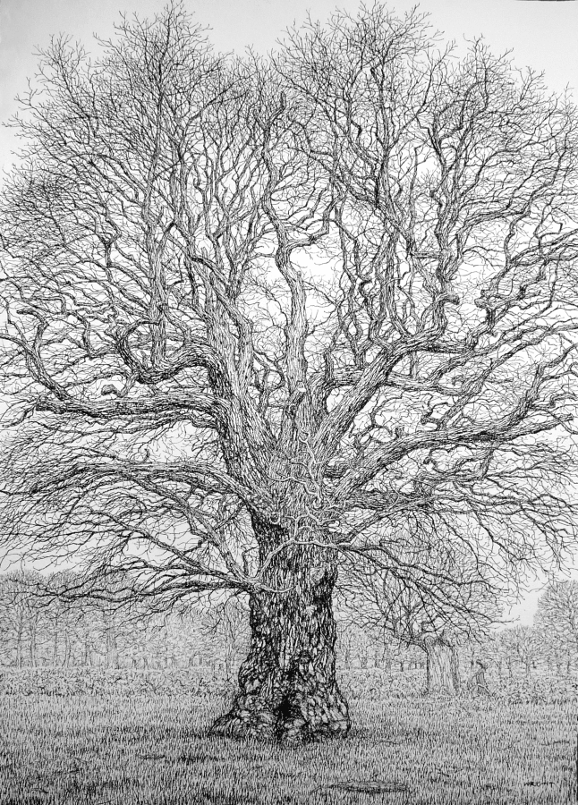 Roy Wright, An Ancient Oak in its Winter Glory, 2020