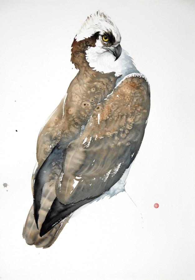 """<span class=""""artist""""><strong>Karl Martens</strong></span>, <span class=""""title""""><em>Osprey (Unframed)</em></span>"""