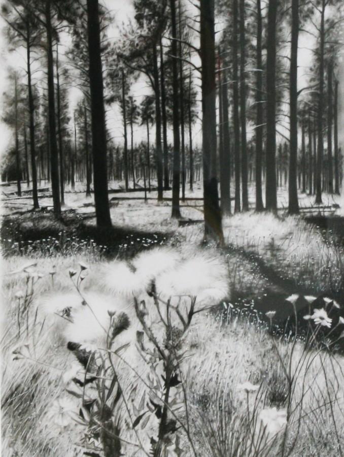 Andrew Tift, Arizona Woods