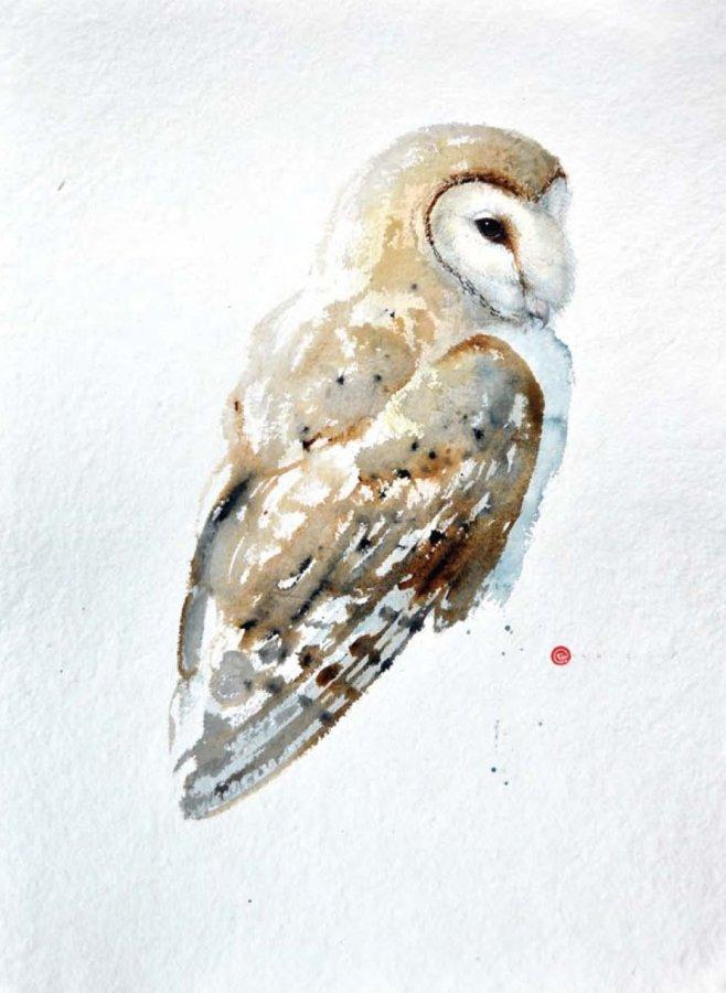 <p>Barn Owl</p>