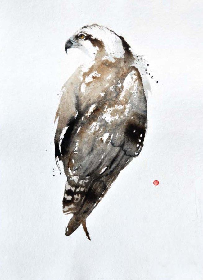 <p>Osprey</p>