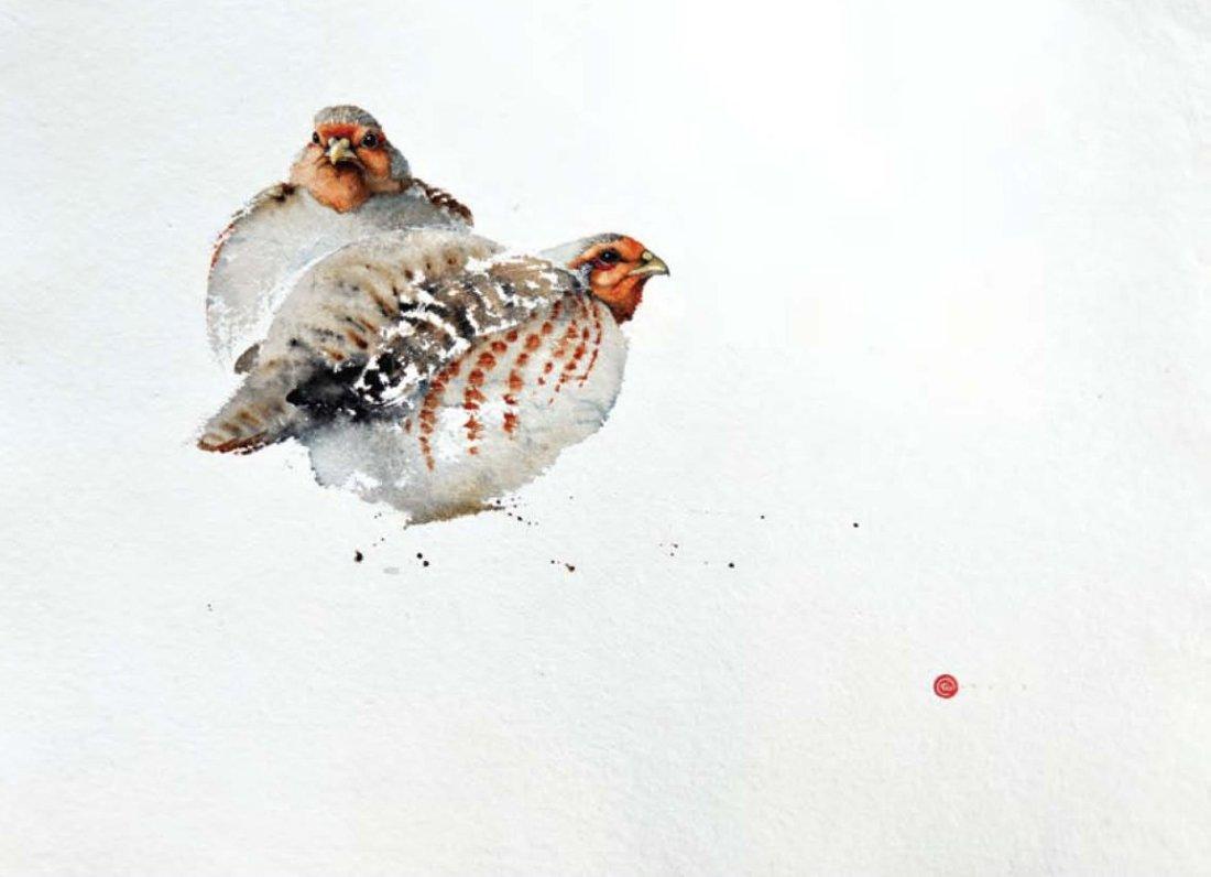 <p>Partridges</p>
