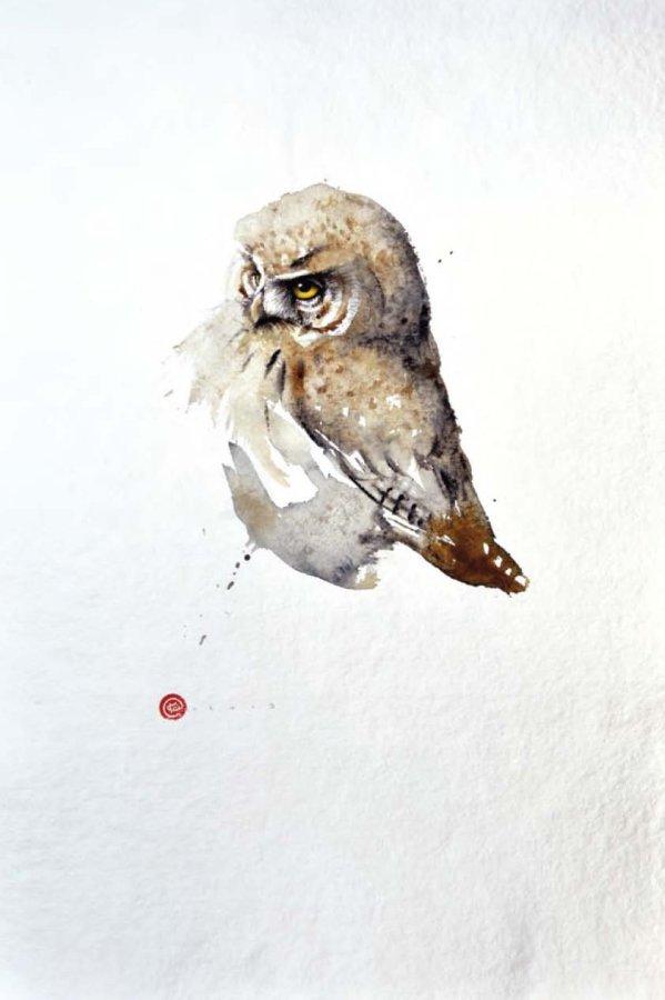 <p>Pygmy Owl</p>