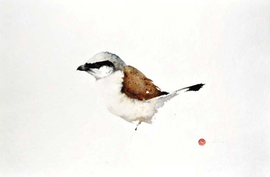<p>Shrike</p>