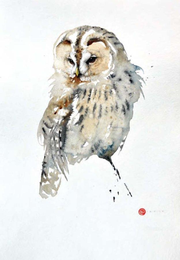 <p>Tawny Owl</p>